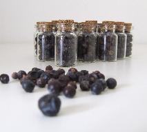 Owoce jałowca – jak wykorzystać je dla zdrowia?